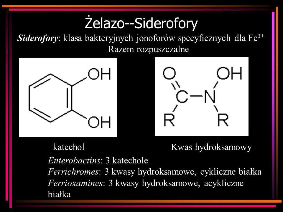 Żelazo--Siderofory Siderofory: klasa bakteryjnych jonoforów specyficznych dla Fe3+ Razem rozpuszczalne.