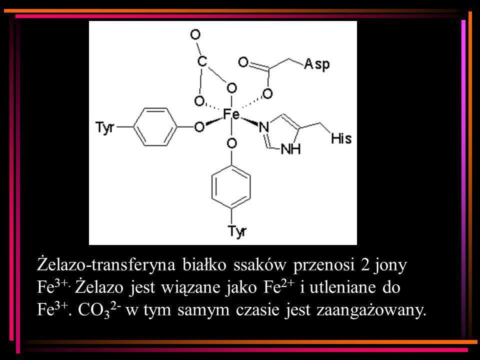 Żelazo-transferyna białko ssaków przenosi 2 jony Fe3+