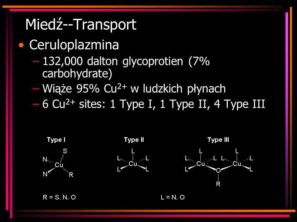 Miedź--Transport Ceruloplazmina
