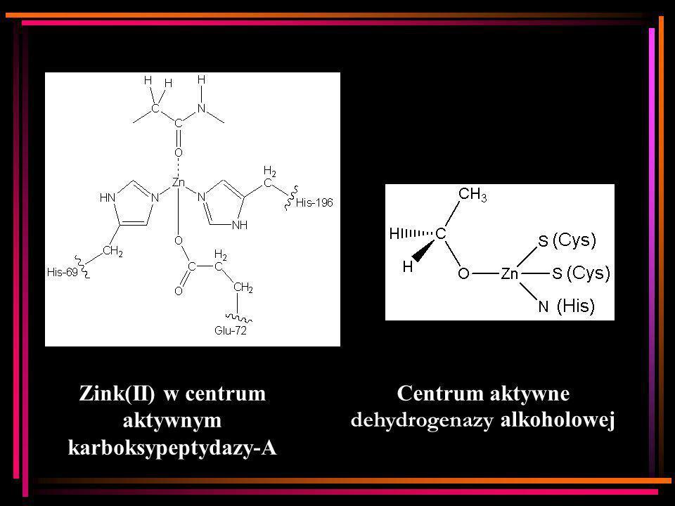 Zink(II) w centrum aktywnym karboksypeptydazy-A