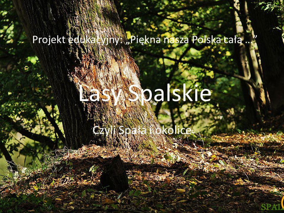 """Projekt edukacyjny: """"Piękna nasza Polska cała … Lasy Spalskie"""