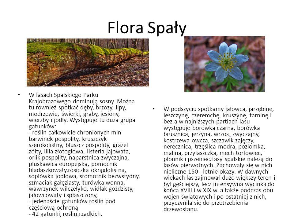 Flora Spały