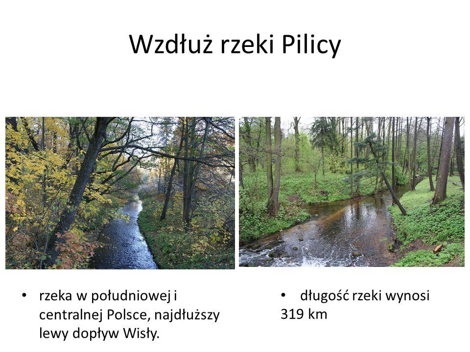 Wzdłuż rzeki Pilicy rzeka w południowej i centralnej Polsce, najdłuższy lewy dopływ Wisły.