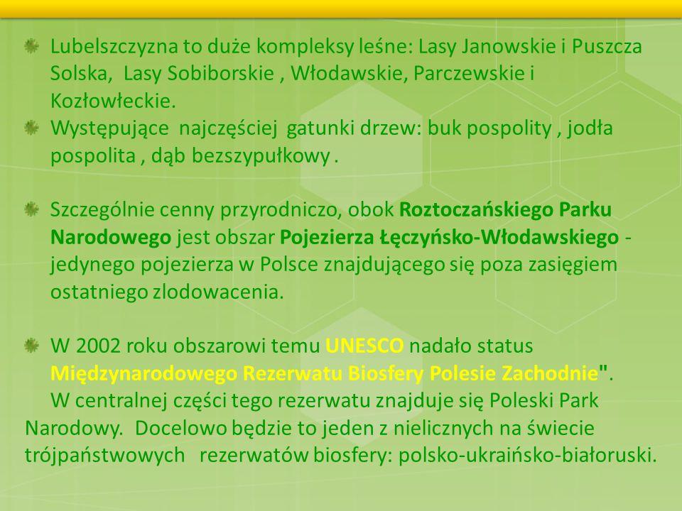 Lubelszczyzna to duże kompleksy leśne: Lasy Janowskie i Puszcza Solska, Lasy Sobiborskie , Włodawskie, Parczewskie i Kozłowłeckie.