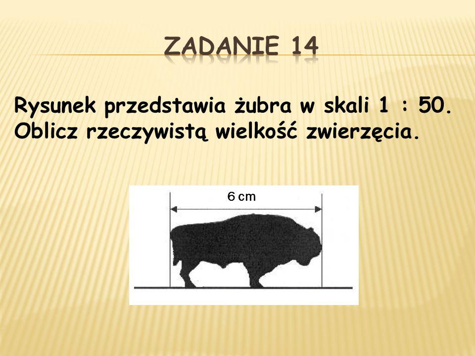 Zadanie 14 Rysunek przedstawia żubra w skali 1 : 50. Oblicz rzeczywistą wielkość zwierzęcia. 6 cm