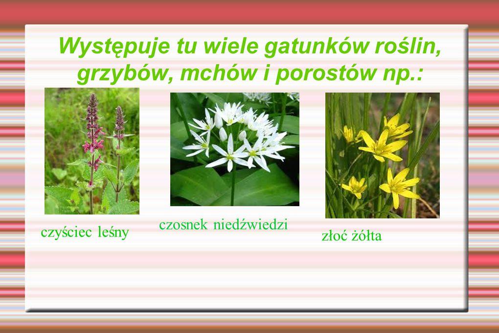Występuje tu wiele gatunków roślin, grzybów, mchów i porostów np.: