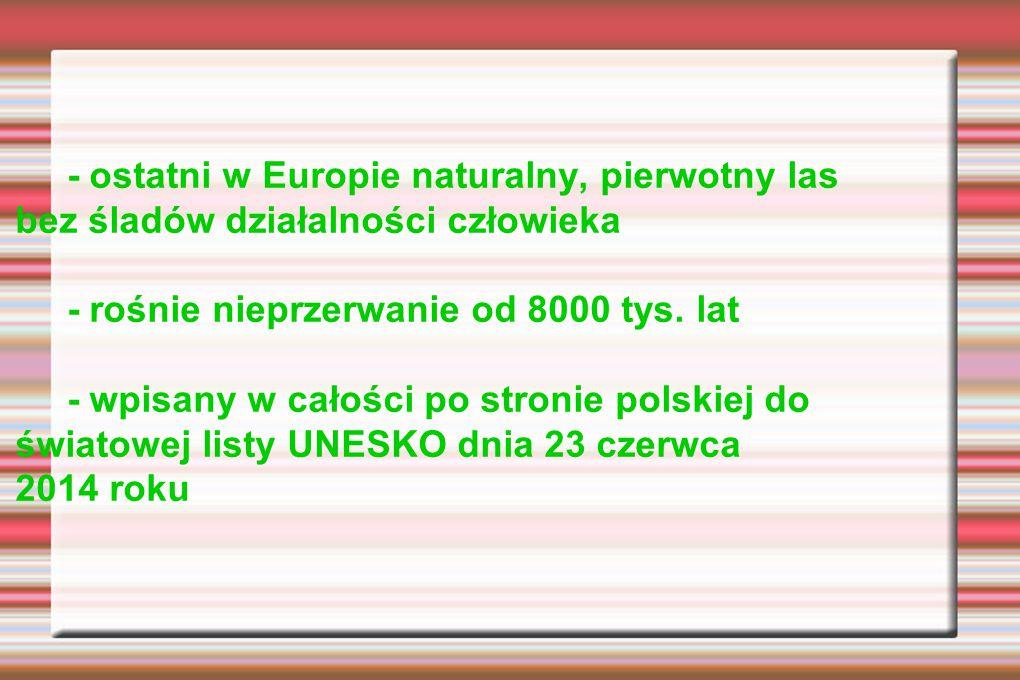 - ostatni w Europie naturalny, pierwotny las bez śladów działalności człowieka