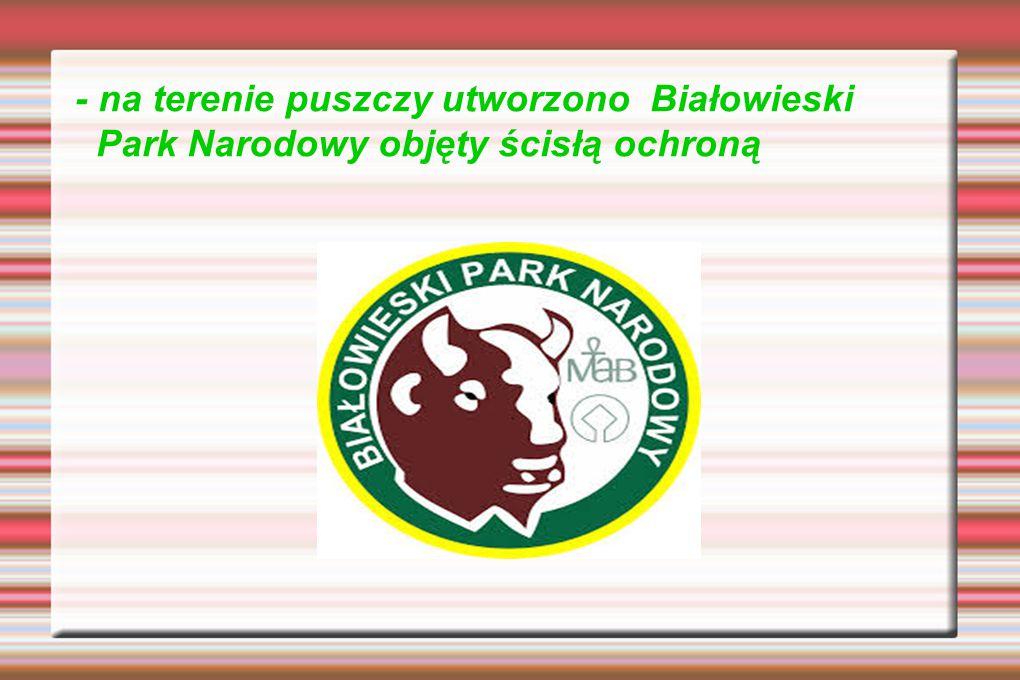 - na terenie puszczy utworzono Białowieski Park Narodowy objęty ścisłą ochroną