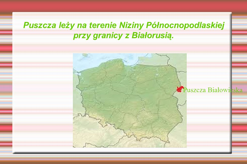 Puszcza leży na terenie Niziny Północnopodlaskiej przy granicy z Białorusią.
