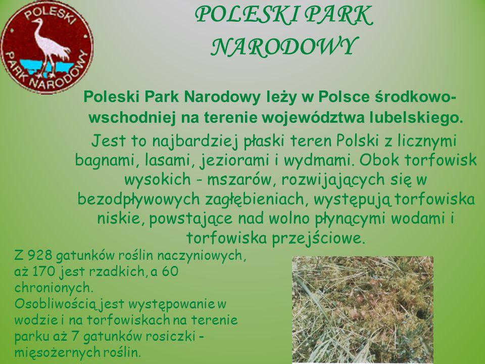 POLESKI PARK NARODOWY Poleski Park Narodowy leży w Polsce środkowo-wschodniej na terenie województwa lubelskiego.
