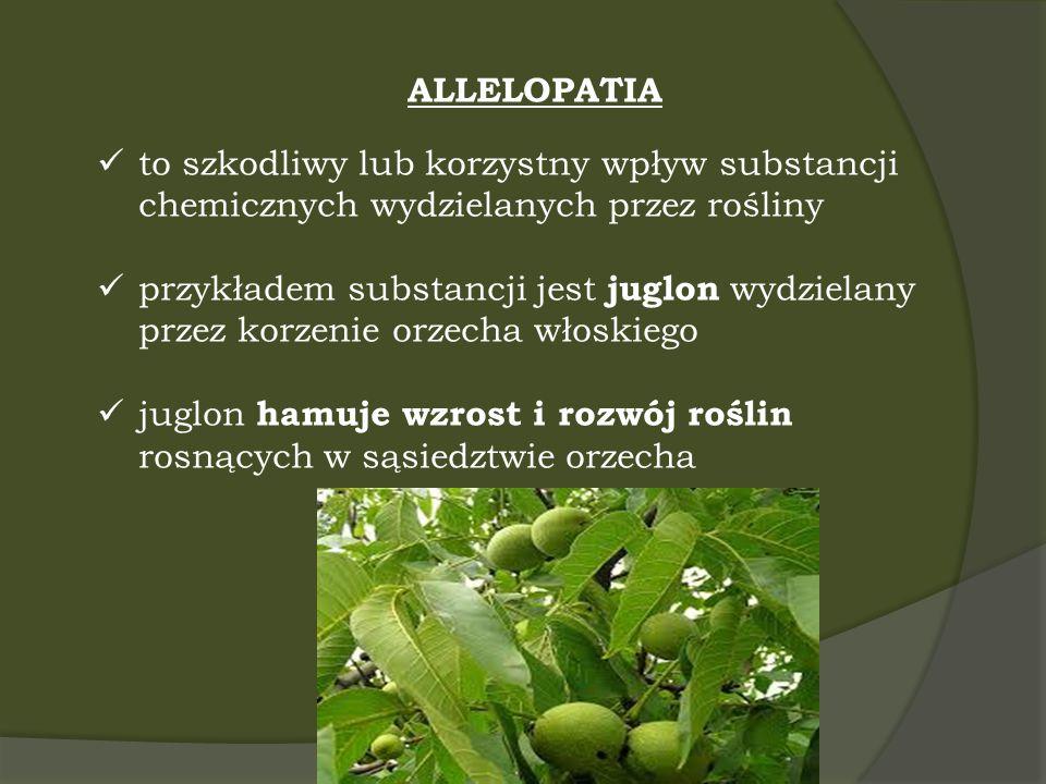 ALLELOPATIA to szkodliwy lub korzystny wpływ substancji chemicznych wydzielanych przez rośliny.
