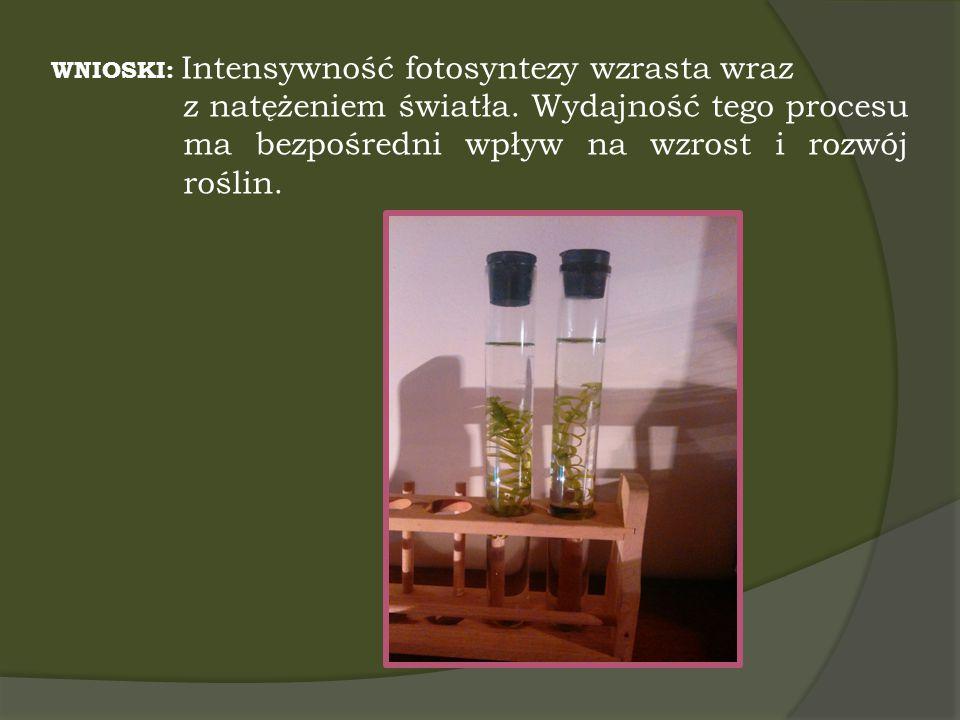 WNIOSKI: Intensywność fotosyntezy wzrasta wraz