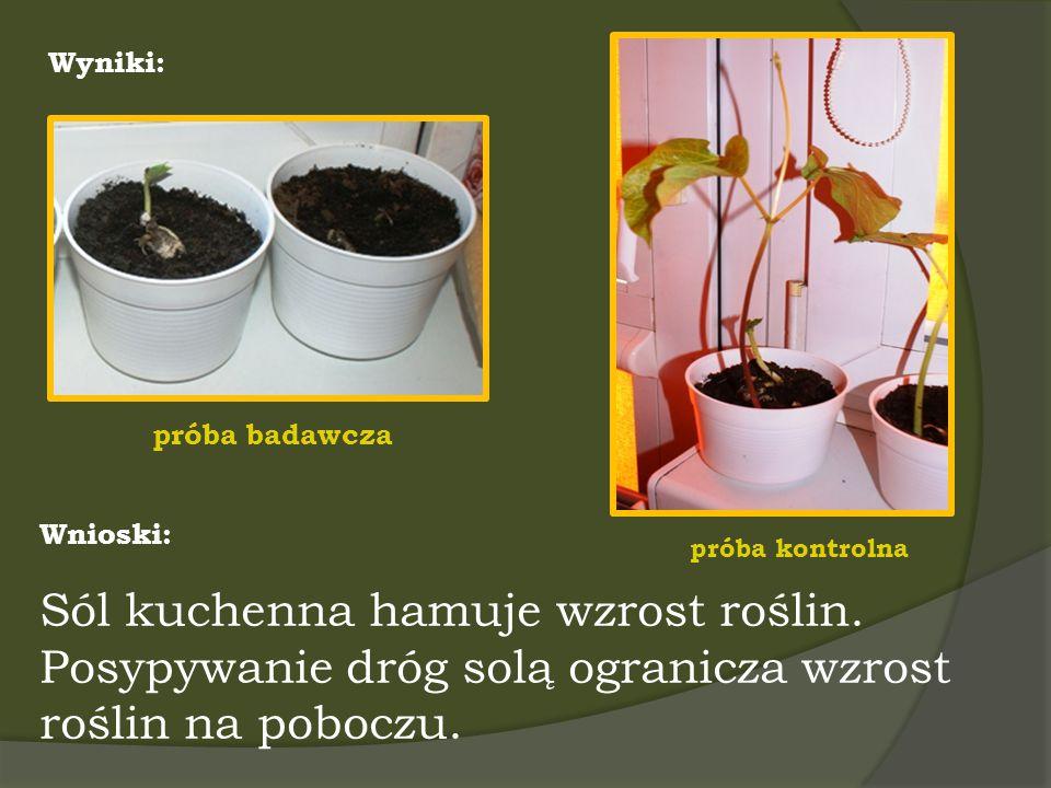 Sól kuchenna hamuje wzrost roślin.