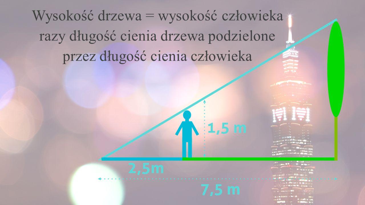Wysokość drzewa = wysokość człowieka