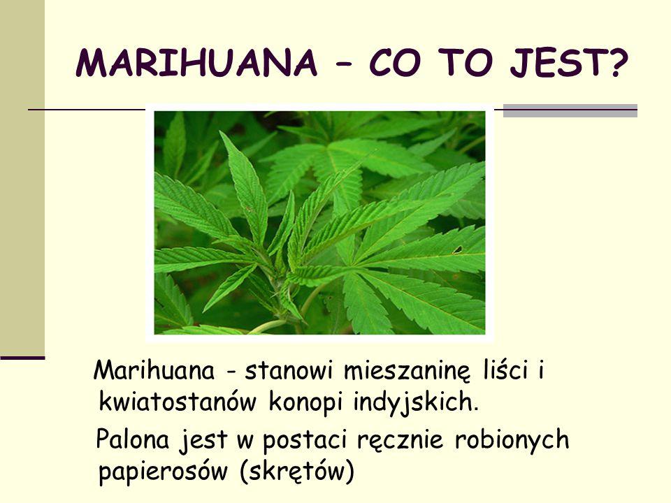 MARIHUANA – CO TO JEST Marihuana - stanowi mieszaninę liści i kwiatostanów konopi indyjskich.