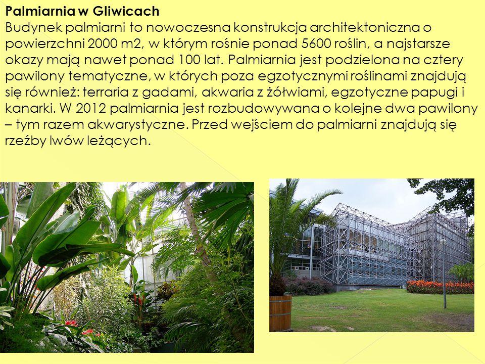 Palmiarnia w Gliwicach Budynek palmiarni to nowoczesna konstrukcja architektoniczna o powierzchni 2000 m2, w którym rośnie ponad 5600 roślin, a najstarsze okazy mają nawet ponad 100 lat.