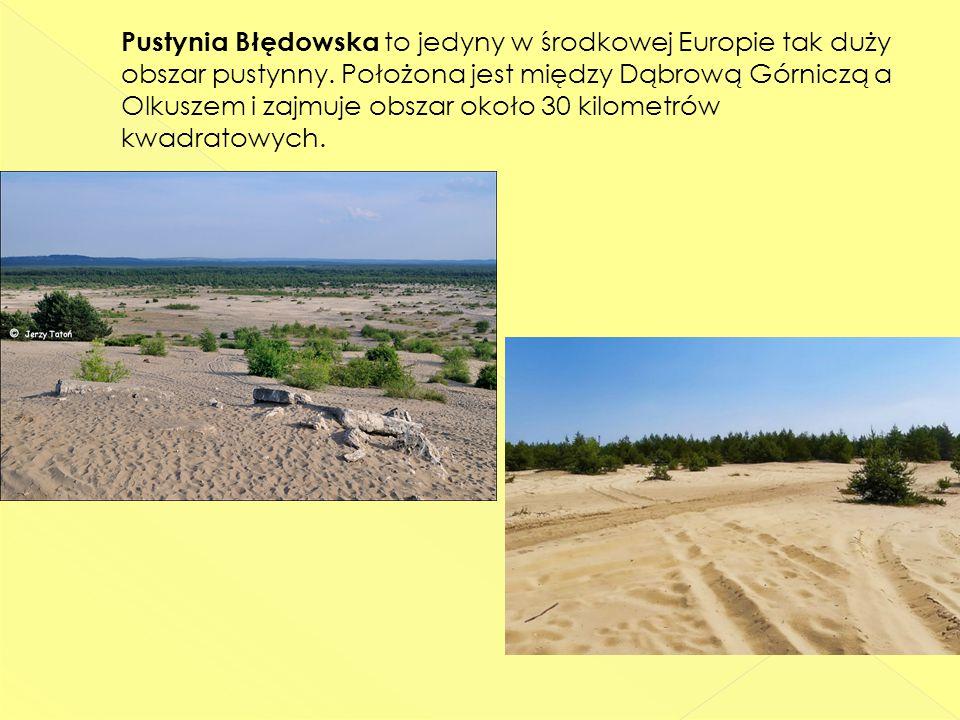 Pustynia Błędowska to jedyny w środkowej Europie tak duży obszar pustynny.