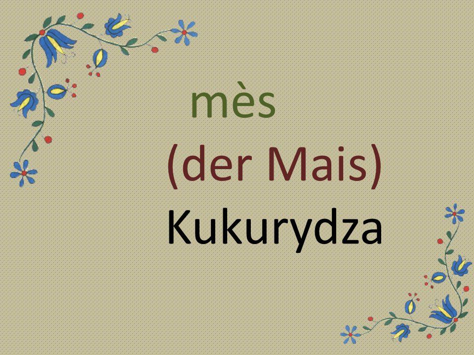 mès (der Mais) Kukurydza