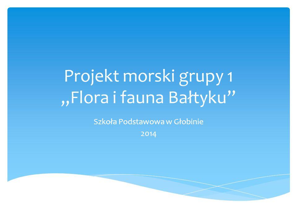 "Projekt morski grupy 1 ""Flora i fauna Bałtyku"