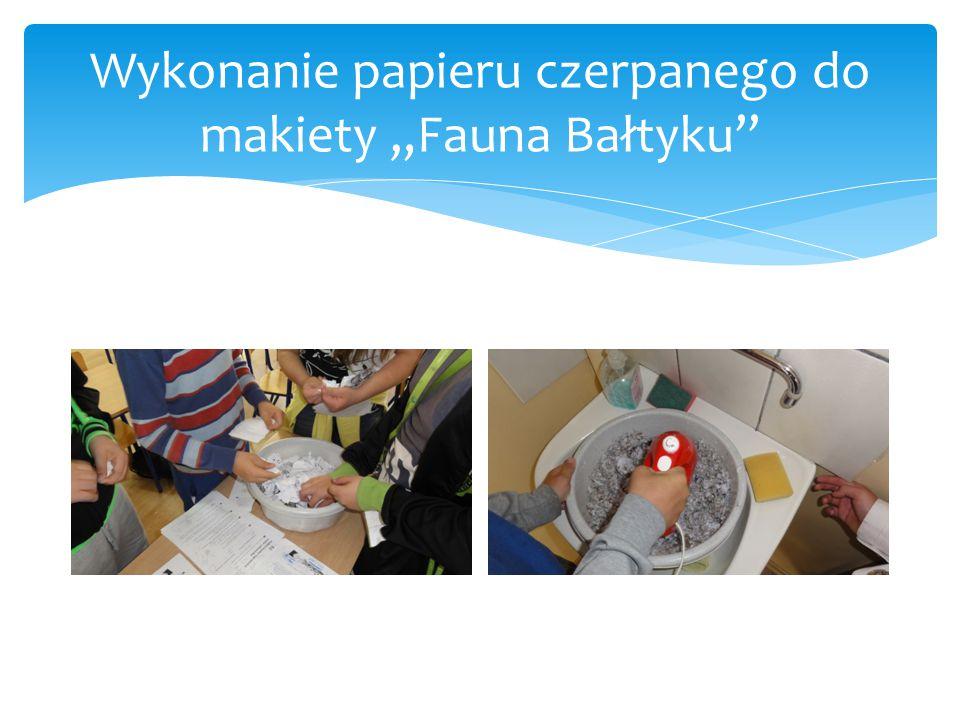 """Wykonanie papieru czerpanego do makiety """"Fauna Bałtyku"""