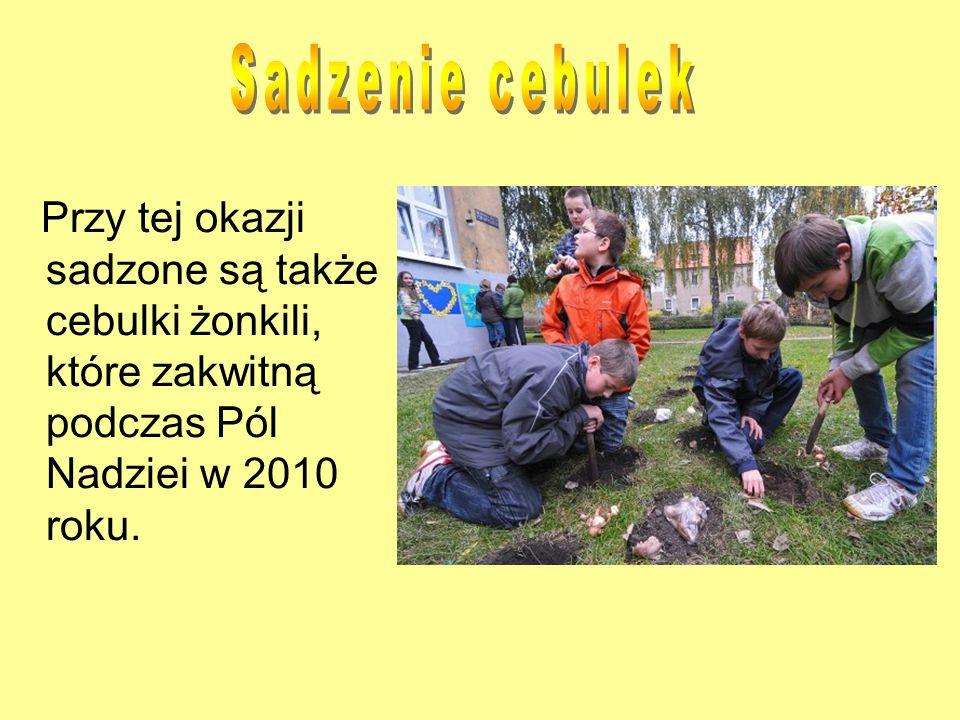Sadzenie cebulek Przy tej okazji sadzone są także cebulki żonkili, które zakwitną podczas Pól Nadziei w 2010 roku.