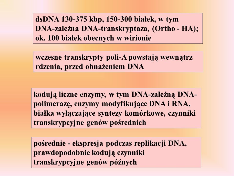 dsDNA 130-375 kbp, 150-300 białek, w tym DNA-zależna DNA-transkryptaza, (Ortho - HA); ok. 100 białek obecnych w wirionie