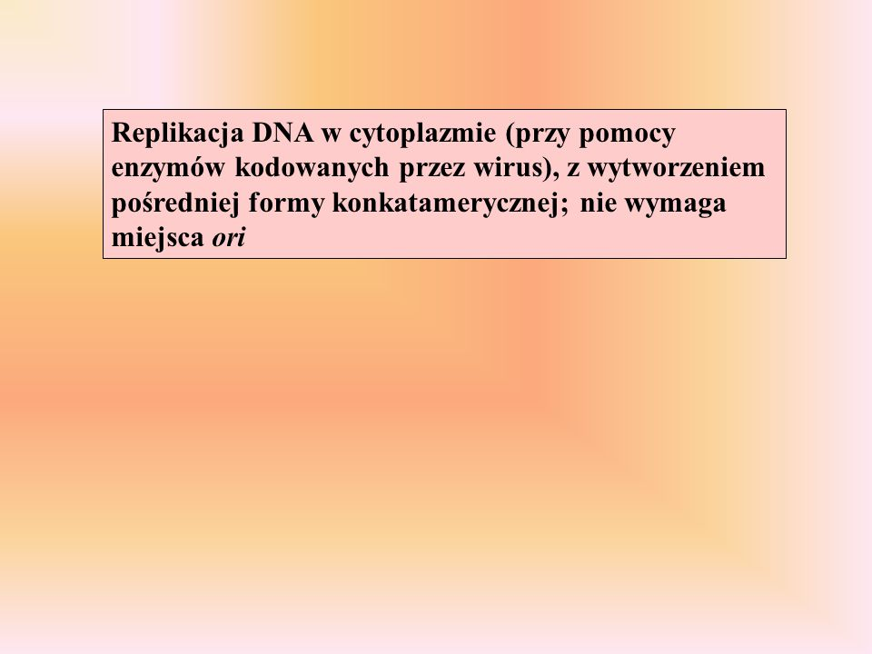Replikacja DNA w cytoplazmie (przy pomocy enzymów kodowanych przez wirus), z wytworzeniem pośredniej formy konkatamerycznej; nie wymaga miejsca ori