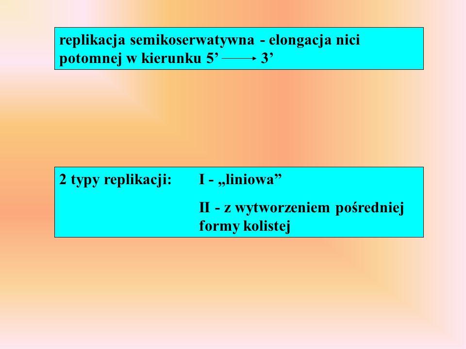 replikacja semikoserwatywna - elongacja nici potomnej w kierunku 5' 3'