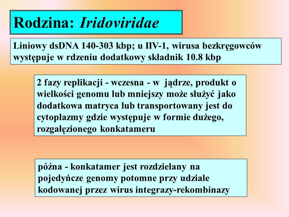 Rodzina: Iridoviridae