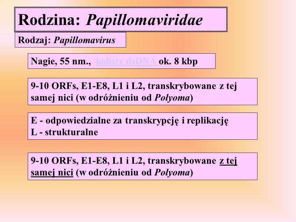 Rodzina: Papillomaviridae