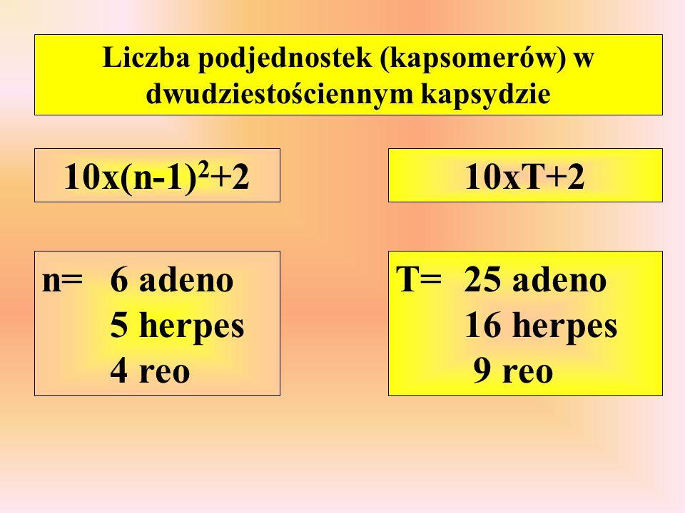 Liczba podjednostek (kapsomerów) w dwudziestościennym kapsydzie