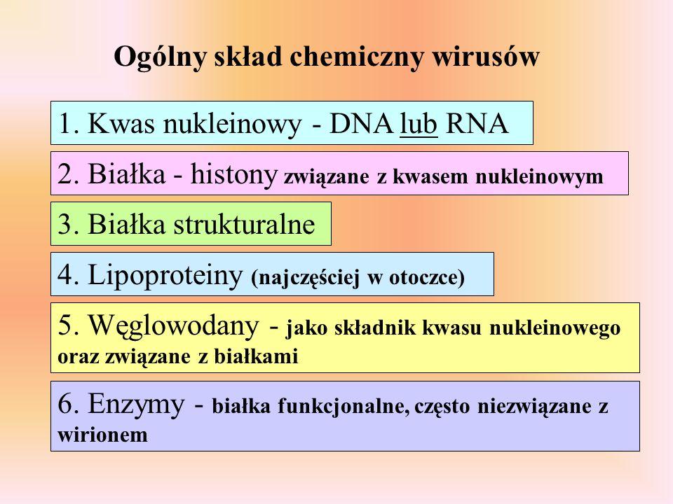 Ogólny skład chemiczny wirusów