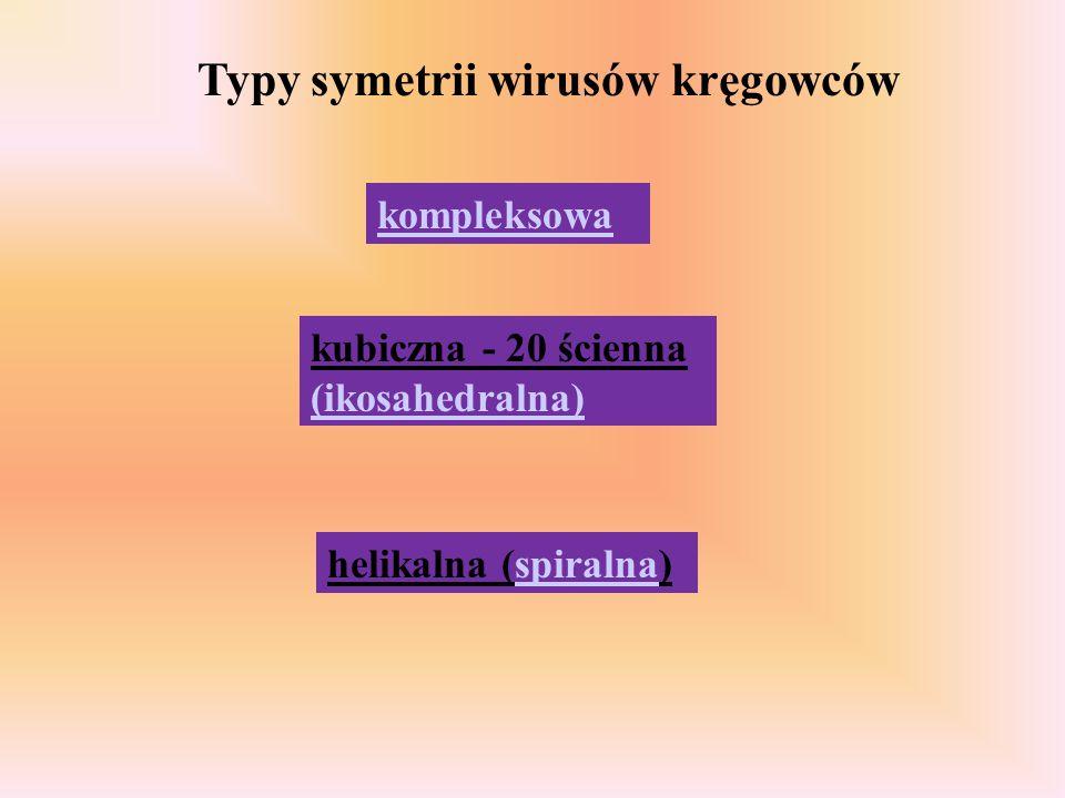 Typy symetrii wirusów kręgowców