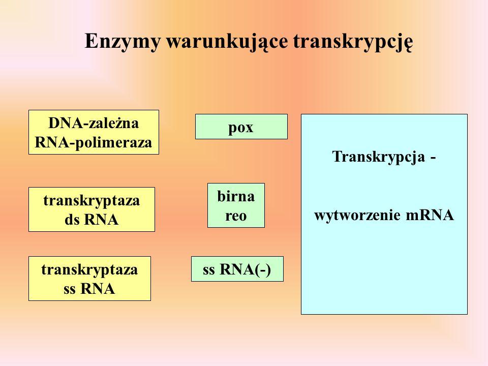 Enzymy warunkujące transkrypcję DNA-zależna RNA-polimeraza