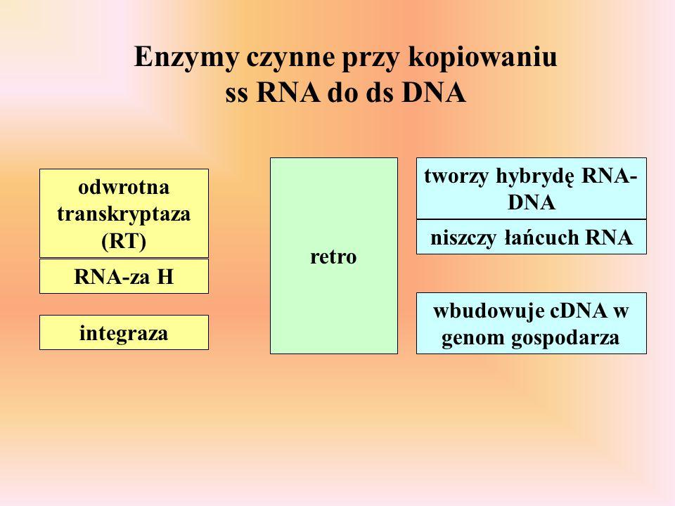 Enzymy czynne przy kopiowaniu ss RNA do ds DNA