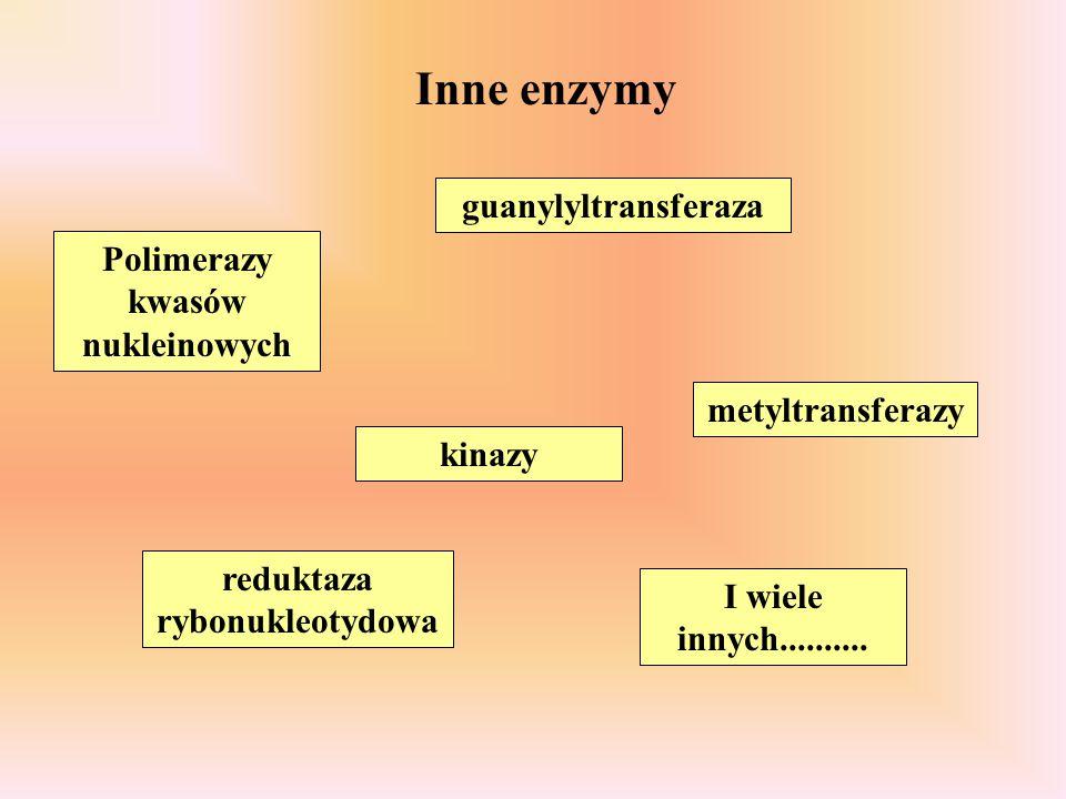 Polimerazy kwasów nukleinowych reduktaza rybonukleotydowa