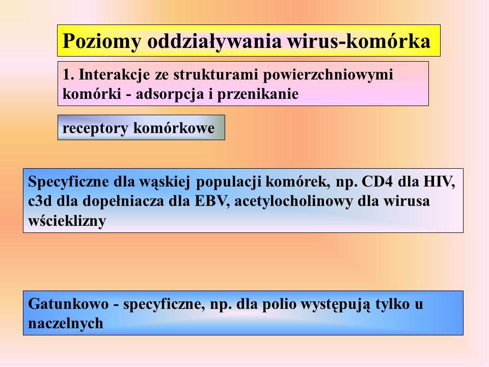 Poziomy oddziaływania wirus-komórka