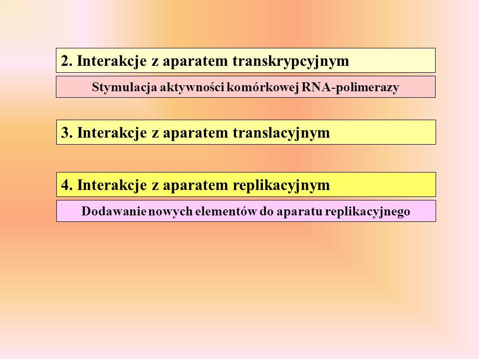 2. Interakcje z aparatem transkrypcyjnym