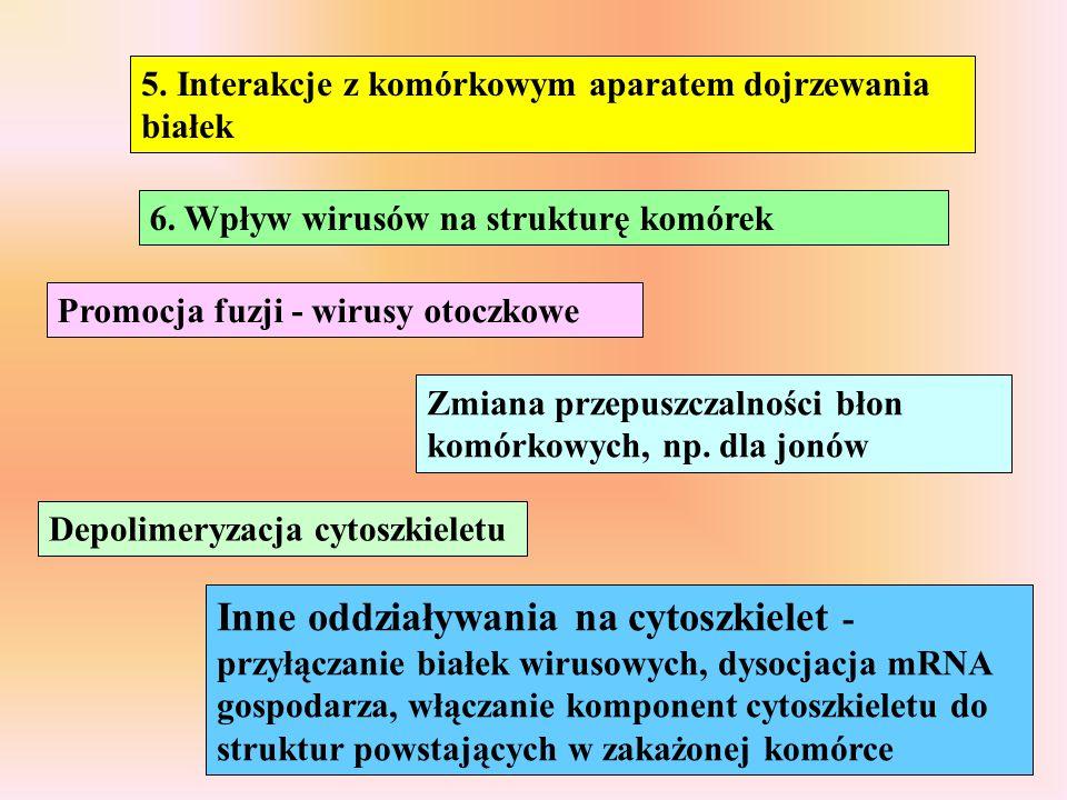 5. Interakcje z komórkowym aparatem dojrzewania białek
