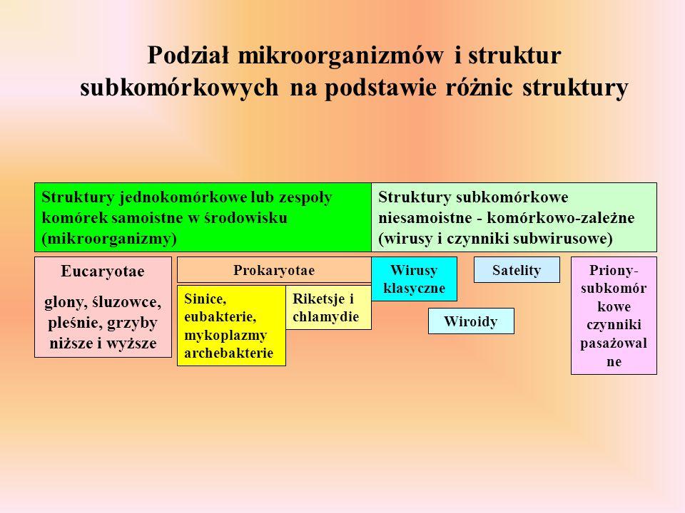 Podział mikroorganizmów i struktur subkomórkowych na podstawie różnic struktury