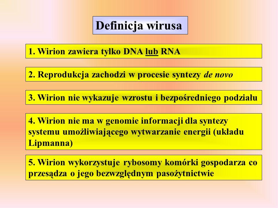 Definicja wirusa 1. Wirion zawiera tylko DNA lub RNA