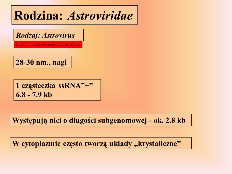 Rodzina: Astroviridae