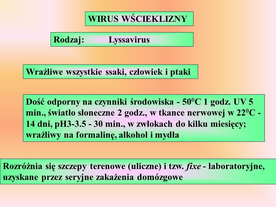 WIRUS WŚCIEKLIZNY Rodzaj: Lyssavirus. Wrażliwe wszystkie ssaki, człowiek i ptaki.