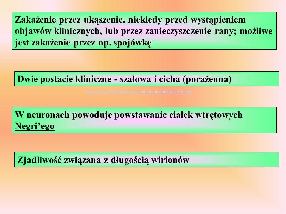 Dwie postacie kliniczne - szałowa i cicha (porażenna)
