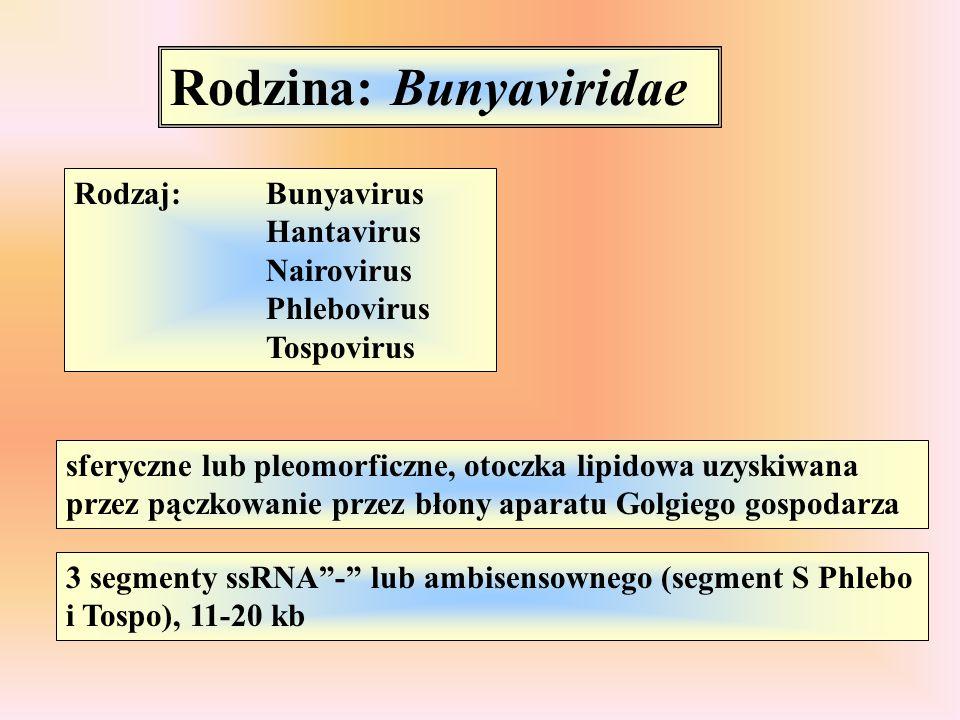 Rodzina: Bunyaviridae