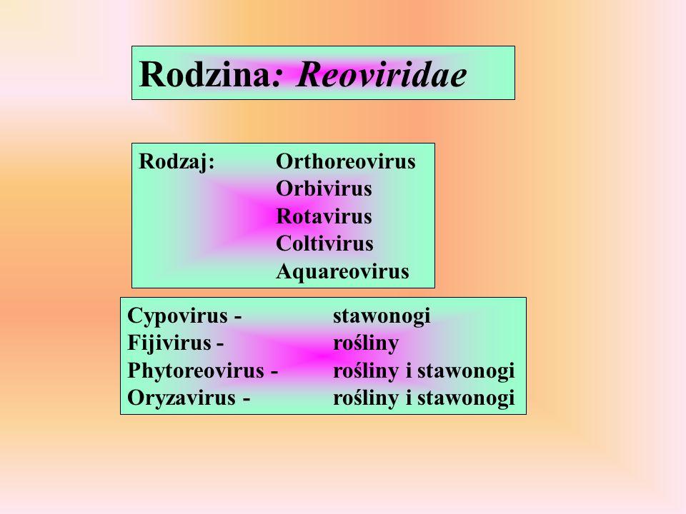 Rodzina: Reoviridae Rodzaj: Orthoreovirus Orbivirus Rotavirus Coltivirus Aquareovirus.