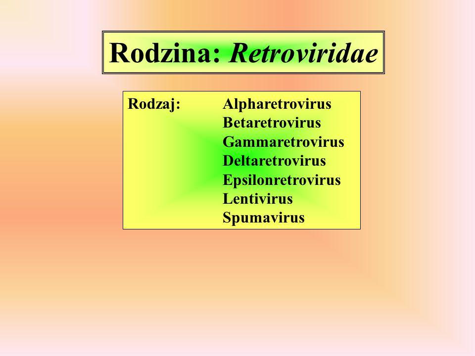 Rodzina: Retroviridae