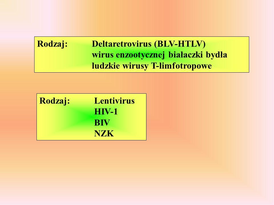 Rodzaj: Deltaretrovirus (BLV-HTLV) wirus enzootycznej białaczki bydła ludzkie wirusy T-limfotropowe
