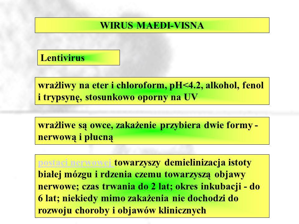 WIRUS MAEDI-VISNA Lentivirus. wrażliwy na eter i chloroform, pH<4.2, alkohol, fenol i trypsynę, stosunkowo oporny na UV.