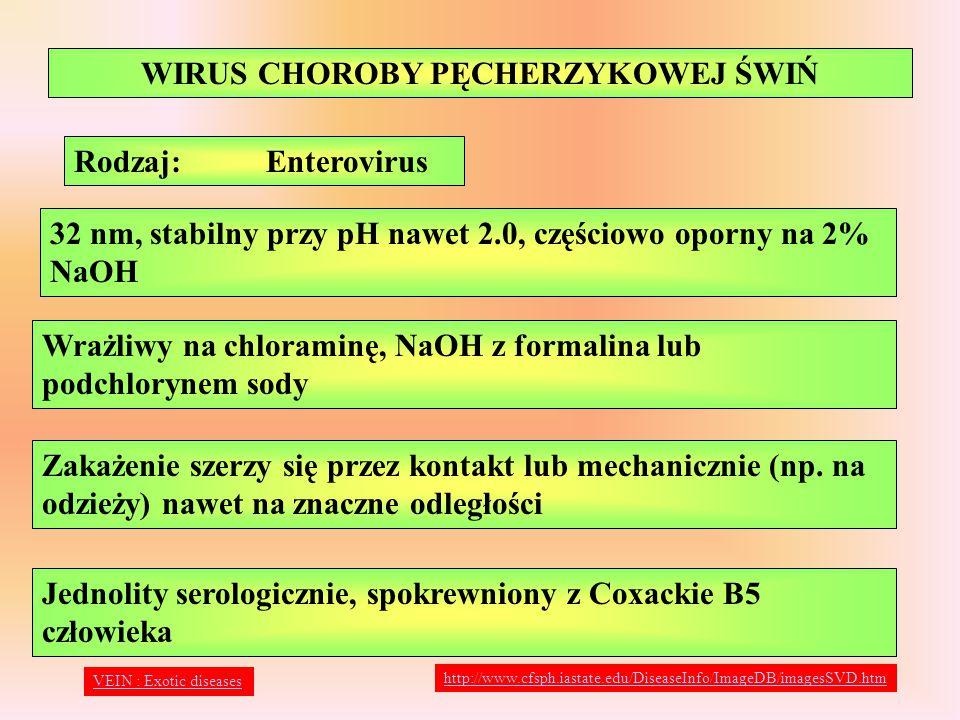 WIRUS CHOROBY PĘCHERZYKOWEJ ŚWIŃ